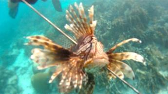 Lionfish Spear 2